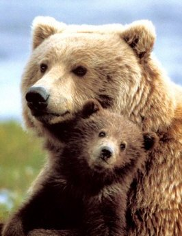 mama-grizzly