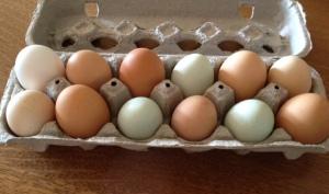 egg pic