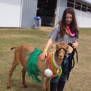 Hula Goat